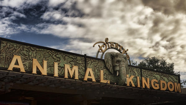 animal kingdom.jpg